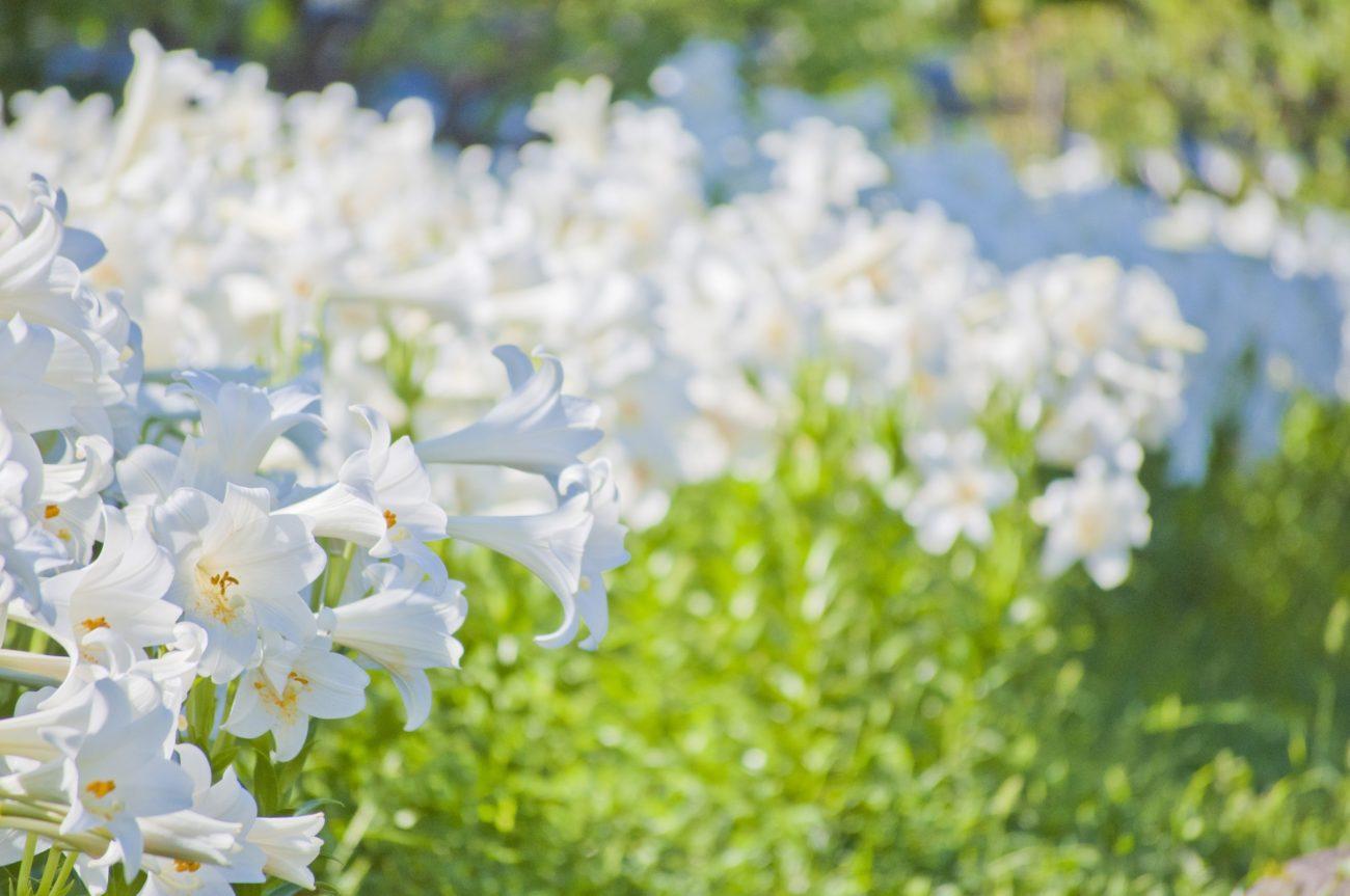 ジルスチュアートの圧倒的人気香水「リラックスオードホワイトフローラル」が『オードホワイトフローラル』にリニューアル!